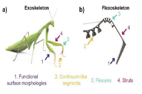 چاپ اسکلت سه بعدی حشرات برای ساخت ربات های منعطف